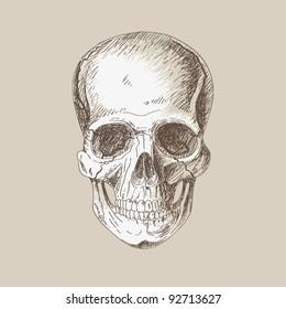 Hand painting of human skull