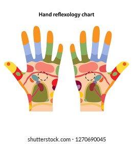Hand reflexology chart. Acupuncture points on the hands. Vector illustration over white background.