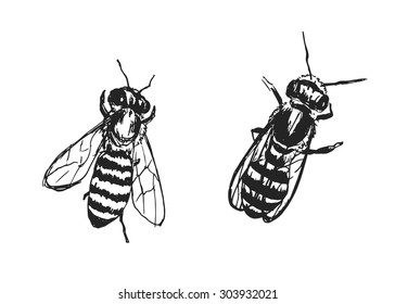 hand sketch of bees