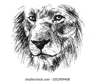 Hand sketch detail of a lion's head. Vector illustration