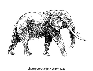 hand sketch of an elephant