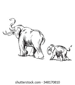 Hand sketch of an elephant with cub