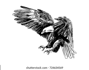 Hand sketch of a flying eagle. Vector illustration