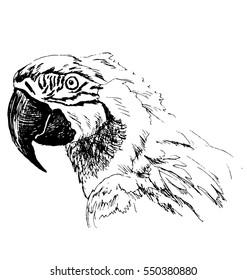 Hand sketch head ara. Vector illustration