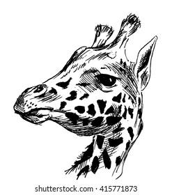 Hand sketch head giraffe. Vector illustration