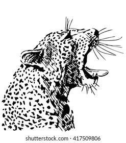 Hand sketch of the head of a roaring leopard