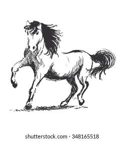 Hand sketch horse