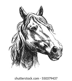 Hand sketch horse head. Vector illustration