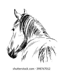 Hand sketch horses behind