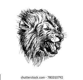 Hand Sketch Lion Head. Vector illustration