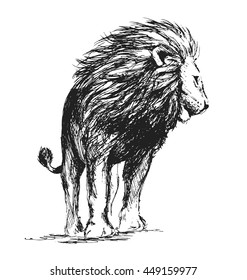 Hand sketch standing lion. Vector illustration