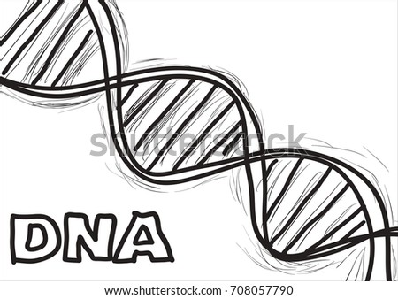 Hand Sketch Structure Dna Stock Vector Royalty Free 708057790