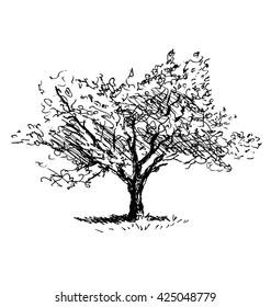 Hand sketch tree. Flowering cherry. Vector illustration