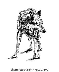Hand Sketch Wolf. Vector illustration