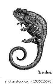 Hand sketched Chameleon. Reptilian collection. Isolated animal illustration on white background. Reptiles drawing. Black and white lizard sketch. Realistic style outline