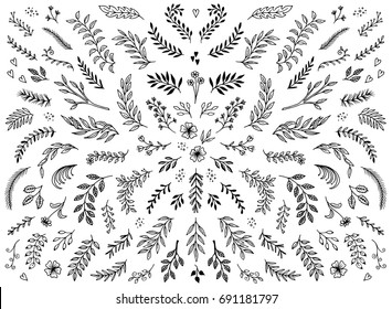 Hand sketched floral design elements, flowers and leaves for text decoration