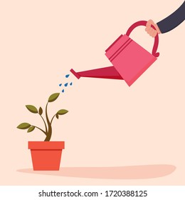 Hand is watering home plant in pot