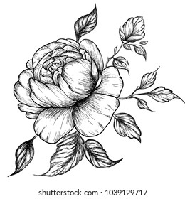 Hand-drawing peonies. Vector graphic flowers. Decorative background for cards, invitations