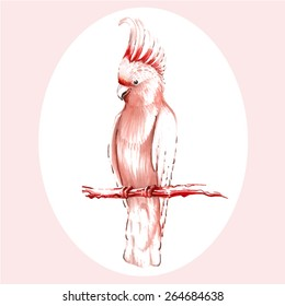 Hand-drawing  pink cockatoo sitting on the branch