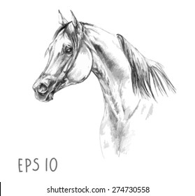 handdrawn of arabian horse sketch with pen in vector format. EPS 10