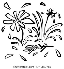 handdrawn artistic wild plant flower illustration in doodle style
