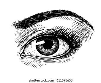 Hand-drawn beautiful female eye, sketch. Makeup, beauty salon symbol. Vintage vector illustration
