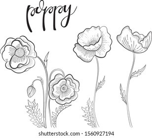 hand-drawn black and white illustration. Vector doodle. Floral print. Postcard with flower. Bouquet of poppies. Floral theme.
