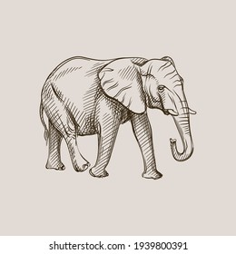 Hand-drawn black and white sketch of elephant on a white background. Wild life. Wild animals. Black and white adult elephant. Dambo elephant
