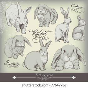 hand-drawn bunny collection - high quality