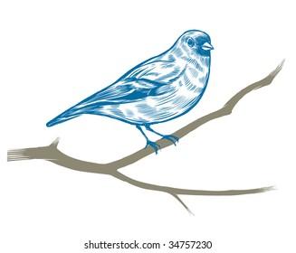 Hand-drawn chaffinch. Vector illustration.