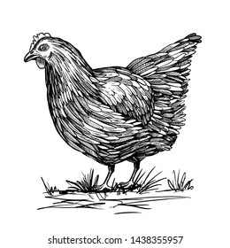 Hand-drawn chicken, chicken. Poultry farm, farm, pet, breeding chickens. Vector illustration of a bird.