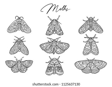 Hand-drawn contour moth collection. Line art. Ideal for coloring print. Vector illustration