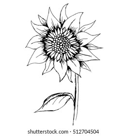 Hand-drawn decorative sunflower element in vector.