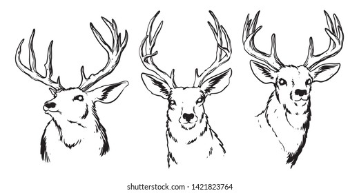 Hand-drawn deer heads lineart with details of feathers and shadows. isolated on white background, Design element for emblem, cover, background, sign, poster, label. Vector illustration