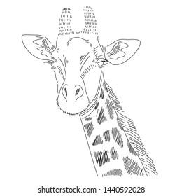 Hand-drawn giraffes wild animals zoo nature environment vector illustration