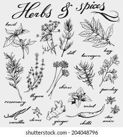 hand-drawn herbs and spices collection