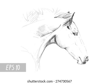 handdrawn horse sketch with pen in vector format. EPS 10