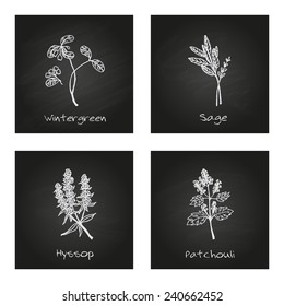 Handdrawn Illustration - Health and Nature Set. Collection of Herbs on Black Chalkboard. Natural Supplements. Wintergreen, Sage, Hyssop, Patchouli