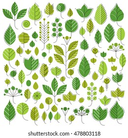 Hand-drawn illustration of simple tree leaves isolated. Green foliage, spring herbs collection. Vector botanical symbols can be used as design elements in ecology conservation theme.