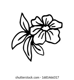 Hand-drawn ink vector simple drawing. Flower with leaves in black outline isolated on a white background. Nature, plants, garden, spring-summer season, element for design patterns