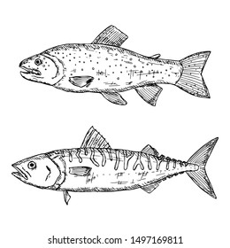 Hand-drawn isolated trout and mackerel. Vector cartoon illustrations of fish. Isolated objects on a white background.