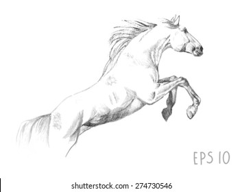 handdrawn of jumping horse sketch with pen in vector format. EPS 10