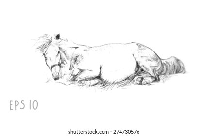 handdrawn of laying horse sketch with pen in vector format. EPS 10