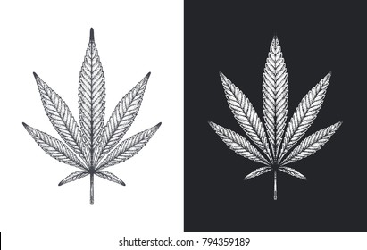 Hand-drawn Leaf of Marijuana. Detailed Cannabis leaf on white and black background. drawing with ink & chalk. isolated vector for design packing and seals
