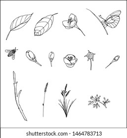 Hand-drawn leaves, bee, butterfly, apple flower, cherry bud, apple bud, grass, branch. Vector hand drawn outline floral set. Black ink sketch