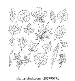 Hand-drawn leaves doodles set. Black silhouettes on white background.Isolated. Vector.
