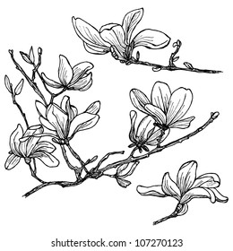 Hand-drawn magnolia flower set in vector