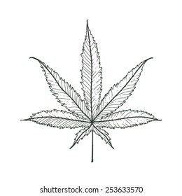 Hand-drawn marijuana leaf. Vector illustration.
