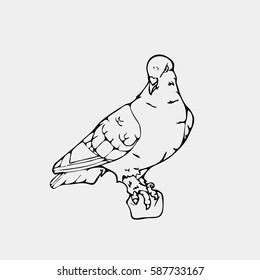 Hand-drawn pencil graphics,small bird, dove, pigeon. Engraving, stencil style. Black and white logo, sign, emblem, symbol. Stamp, seal. Simple illustration. Sketch.