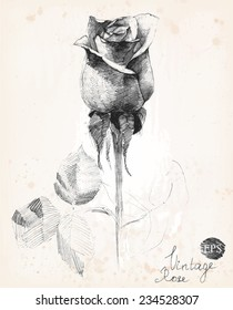 Hand-drawn pencil sketch of a rose. Vintage style vector illustration.